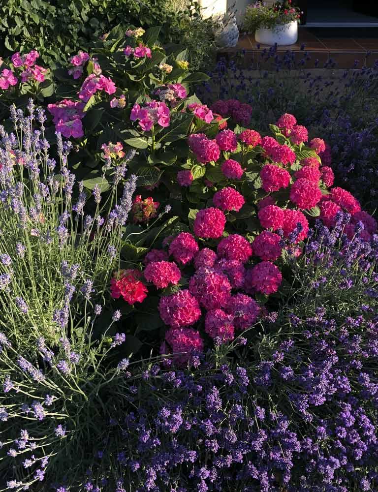 Unsere Blumen vor dem Haus